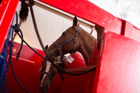 lan_caballos
