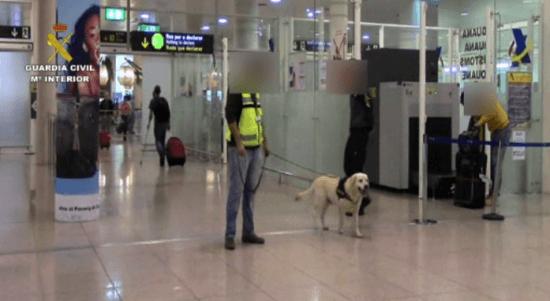 Imagen de esta actuación de la Guardia Civil y del perro 'Pipo' / Guardia Civil